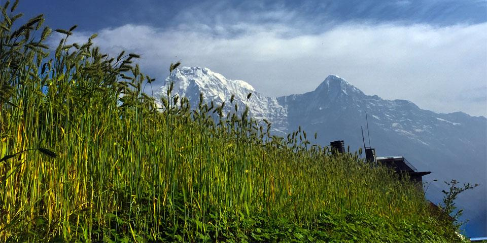 Annapurna View Poon Hill Trek
