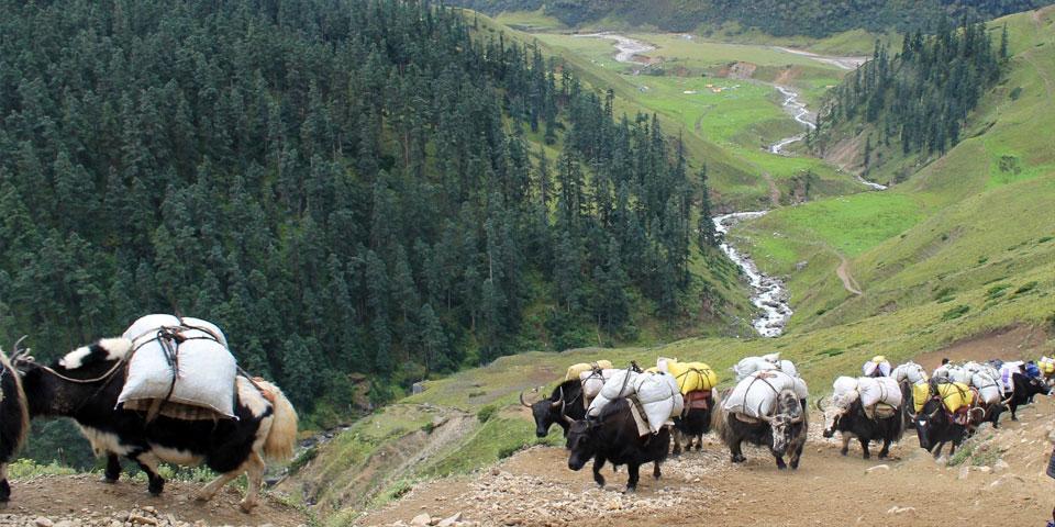 Saipal Base Camp Trek